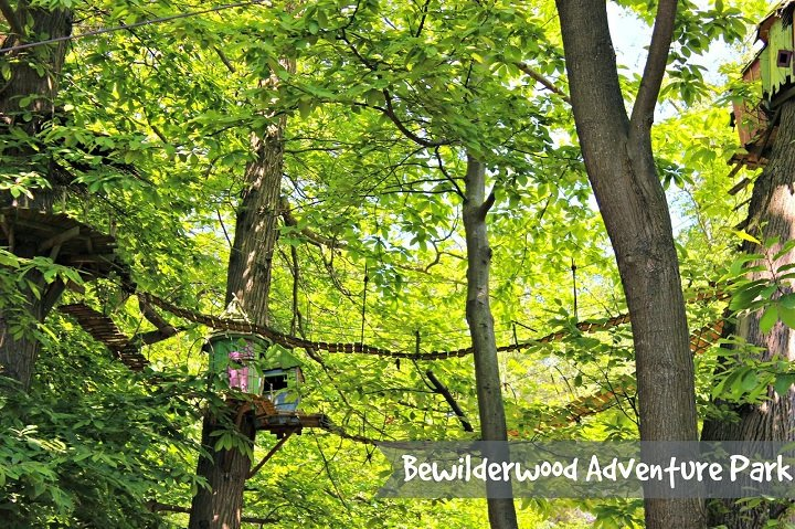 bewilder wood adventure park review