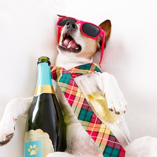 dog in sunglasses and tie with a champagne bottle