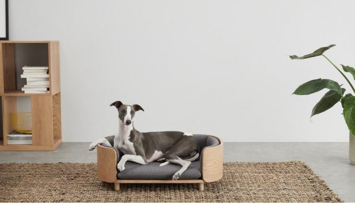 dog in wooden sofa styled dog bed