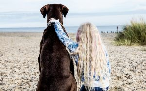 blonde haired little girl sat next to a huge brown dog on the beach with her arm round it