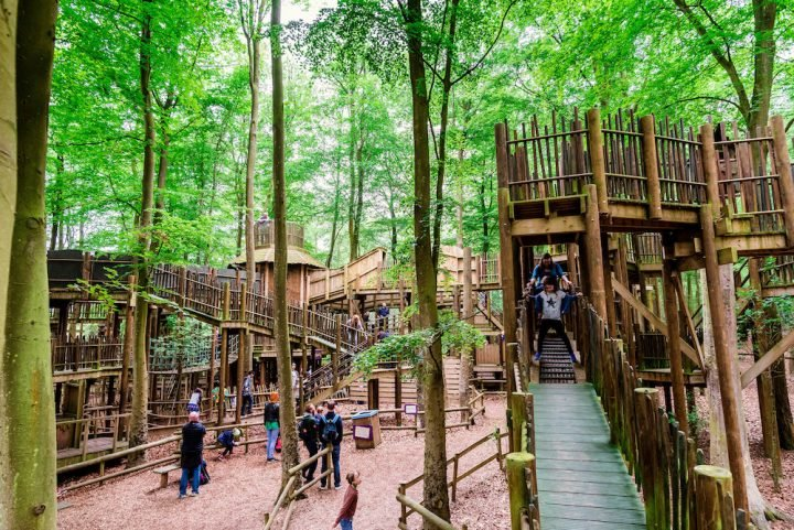 tree house adventure in the woods