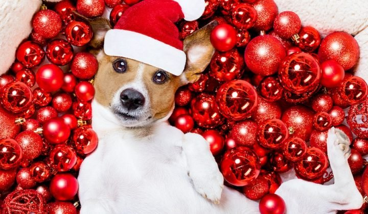 dog in santa hat on a bed of baubles